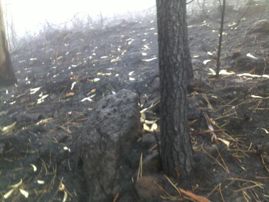 incendio-ponte-lima-pinheiro-201608